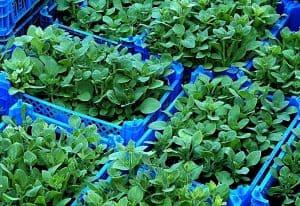 צמחים מפלסטיק