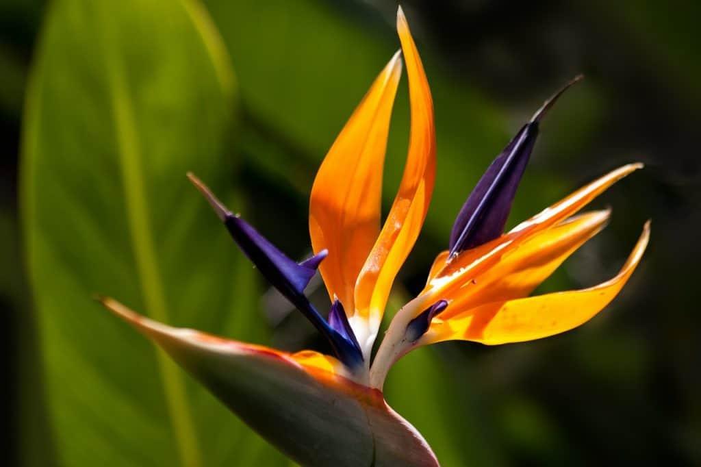 צמח בצורת ציפור